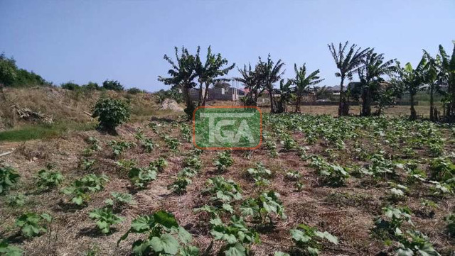 FOR SALE: 1 Plot of Land (70ft x 100ft) for sale in TSE ADDO - 2