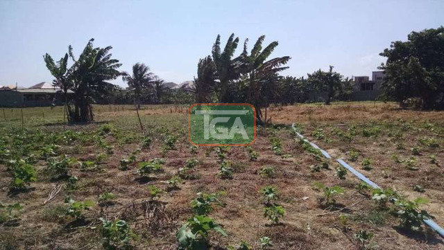 FOR SALE: 1 Plot of Land (70ft x 100ft) for sale in TSE ADDO - 3