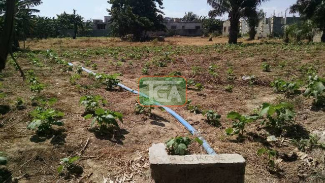 FOR SALE: 1 Plot of Land (70ft x 100ft) for sale in TSE ADDO - 4