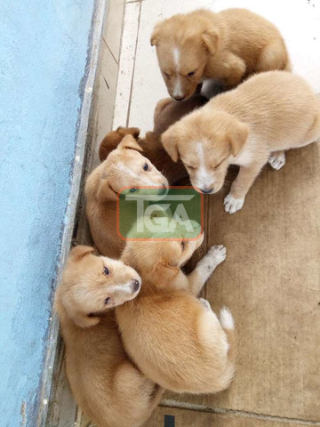 Cute local puppies for sale - 2
