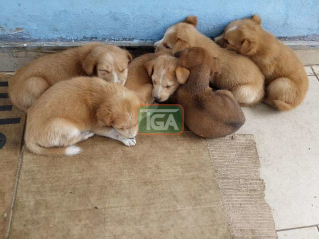 Cute local puppies for sale - 3