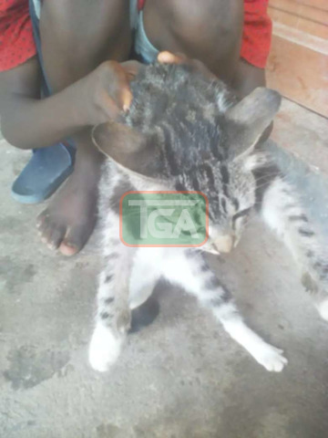 I want to sell cat - 1