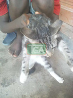 I want to sell cat