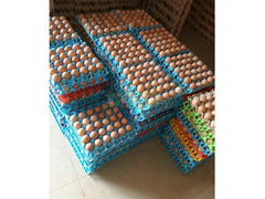 Jumbo eggs for sale