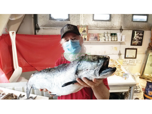 Fish company needs workers - 1